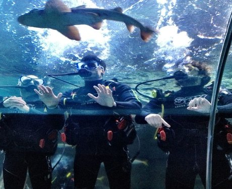 The Wanted swimming with sharks