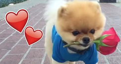 Jiff Valentine's Day Viral Video